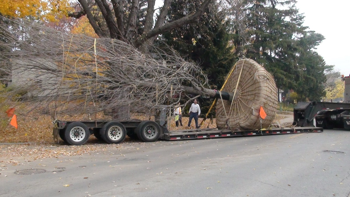 Tree being transported