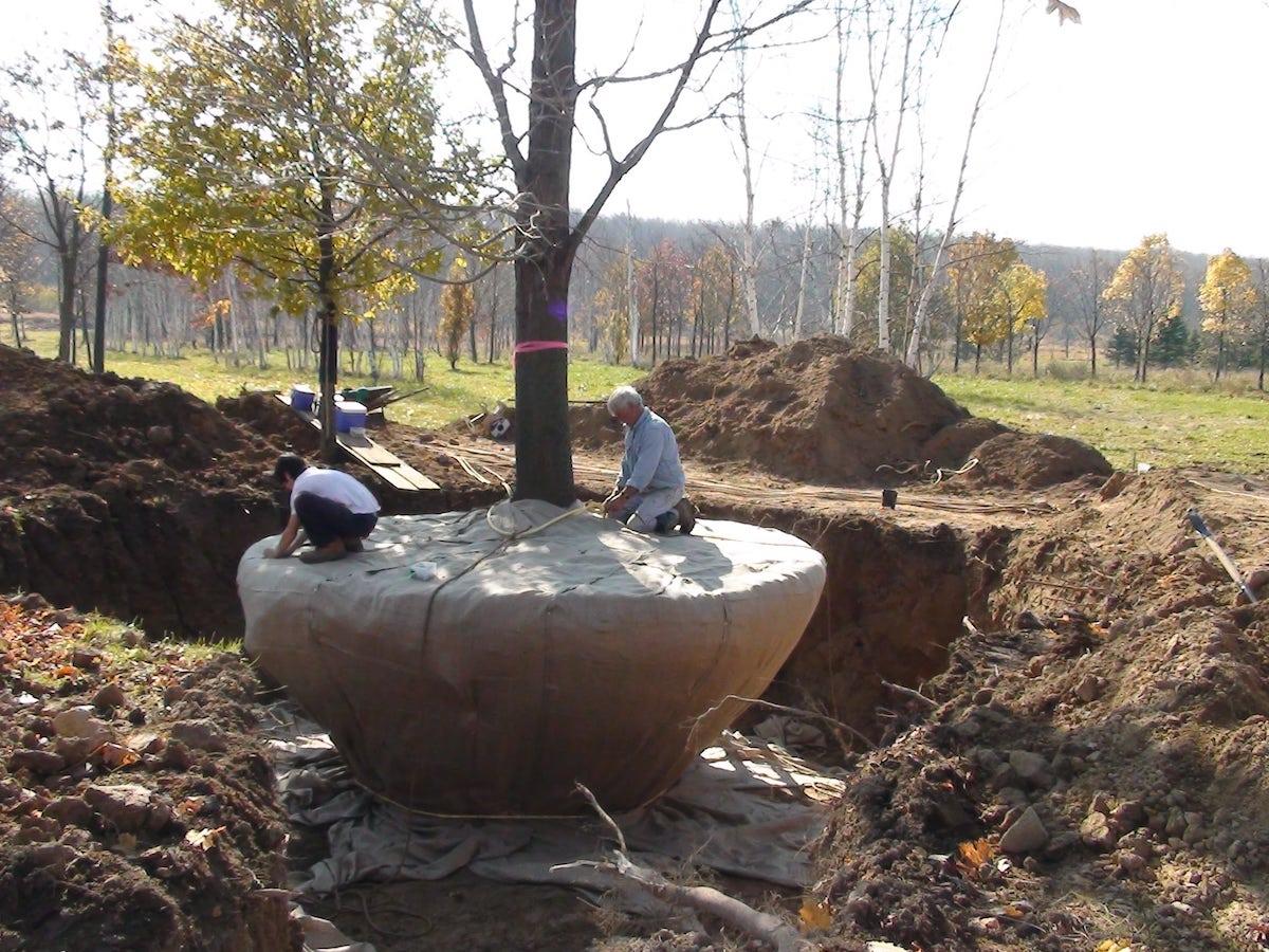 Men securing tree
