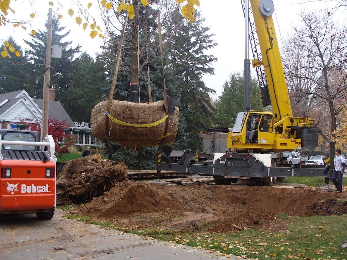 Crane moving a tree